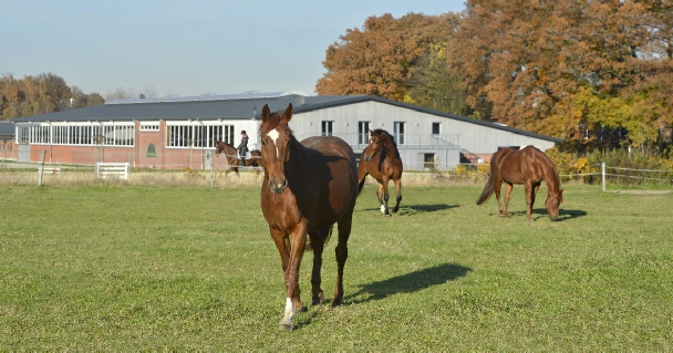 großzügige gepflegte Pferdekoppeln